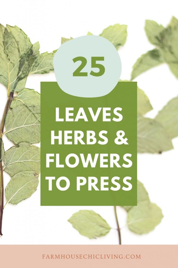 25 leaves, herbs, and flowers best for flower pressing!