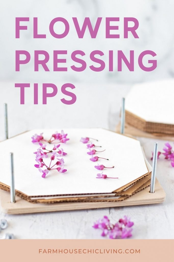 Tips for Collecting and Preparing Herbs, Leaves, and Flowers for Pressing