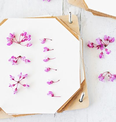 Learn how to use a flower press with our six detailed steps!