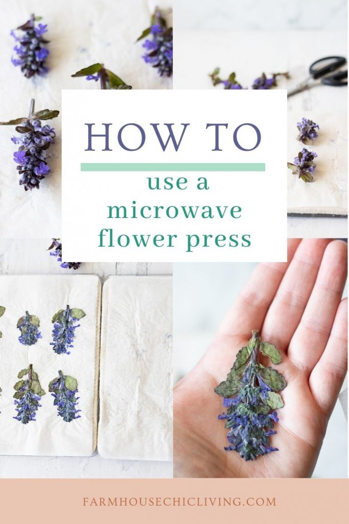 Follow these step-by-step instructions on how to press flowers in the microwave for great results!